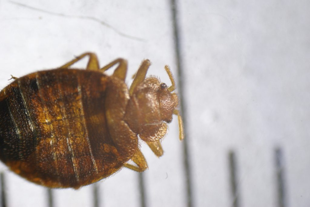 Why I Have Bed Bugs How To Stop Them